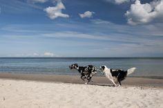 playing dogs at the beach by Uta Naumann
