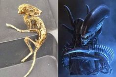 """SKELETON OF ALIEN"" Found by Director of Label?"