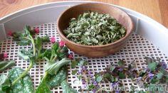 Auch wenn Winter und Minusgrade schon vergessen sind, ist jetzt die Zeit Pflanzen gegen den Husten zu sammeln. Mische deinen Hustentee mit diesen Kräutern