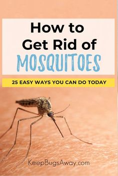 How to Get Rid of Mosquitoes: 25 Easy Ways to Keep Mosquitoes Away Want to learn how to get rid of mosquitoes? Well, you're in the right place. In this post you'll discover 25 simple ways to kill and keep mosquitoes away. Mosquito Spray, Natural Mosquito Repellant, Mosquito Repelling Plants, Diy Pest Control, Mosquito Control, Home Remedies For Mosquito, Keeping Mosquitos Away, How To Kill Mosquitoes, Mosquito Larvae