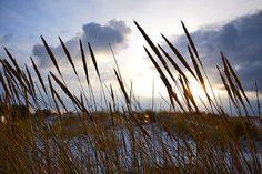 Flickr photo Wind Turbine, Landscapes, Nature, Paisajes, Scenery, Naturaleza, Nature Illustration, Outdoors, Natural