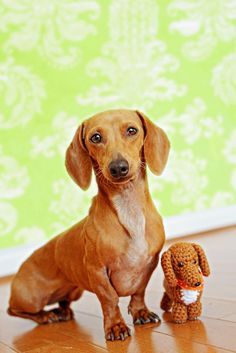 15 Reasons Why You Should Never Own Dachshunds