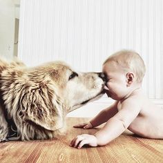 This Golden Retriever Knows How to Give His Tiny Human the Ultimate Kisses Dogs And Kids, Animals For Kids, Animals And Pets, Baby Animals, Funny Animals, Cute Animals, Babies With Dogs, Baby Puppies, Baby Dogs