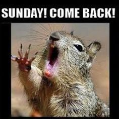 We all love squirrels; they are cute, furry and funny and they make hilarious memes. So here are a few very funny Squirrel memes to put a smile on your face. Humor Animal, Animal Memes, Funny Animals, Talking Animals, Funniest Animals, Squirrel Memes, Animal Pictures, Funny Pictures, Monday Pictures