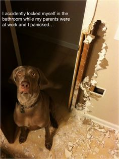 Seems to be a weimaraner month on dog shaming...