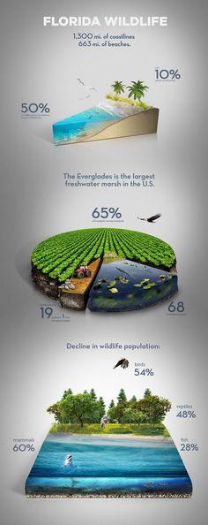 Business infographic : Florida Wildlife Infographics