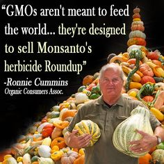 """GMOs aren't meant to feed the world...they're designed to sell Monsanto's herbicide Roundup.""""  Ronnie Cummins"""