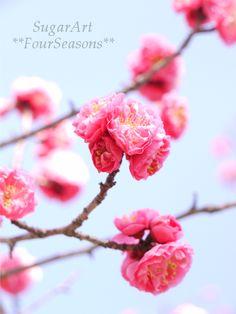春のお散歩|シュガーアート❤アイシングクッキー I love Sugar♪