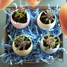 Easter DIY eggshell plants - 15 Easy and Fun DIY Easter Craft Ideas