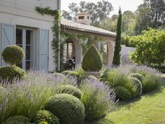 Boxwood Landscaping, Front House Landscaping, Boxwood Garden, Topiary Garden, Farmhouse Landscaping, Farmhouse Garden, Backyard Landscaping, Tuscan Garden, Italian Garden