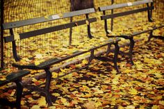 don't you just wanna sit on this bench and let the leaves fall on you??