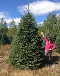 Black Hills Spruce Tree Landscape Pinterest Trees