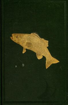 Book of the black bass, comprising its complete scientific and life history : - Biodiversity Heritage Library