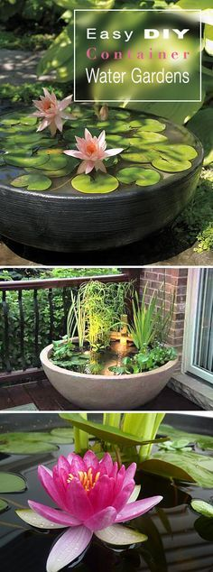 Easy DIY Container Water Gardens • Great tips, ideas and DIY projects!                                                                                                                                                                                 More
