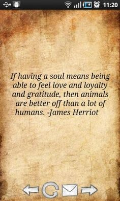 If Having A Soul Being Able To Feel  Love And Loyalty And Gratitude Then Animals Are Better Off Than A Lot Of Humans - Animal Quote