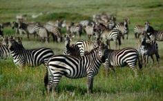European, U.S. Billionaires Tour, Hail Serengeti