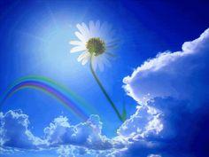 Animated rainbow blue sky flower