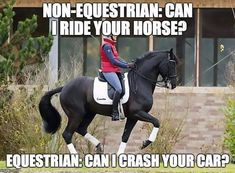 That's me I really trust you if I let you ride my horse That's me I really trust you if I let you ride my horse - Art Of Equitation Funny Horse Memes, Funny Horse Pictures, Funny Horses, Cute Horses, Funny Animal Memes, Horse Love, Cute Funny Animals, Beautiful Horses, Funny Equine
