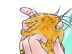 How to Give a Cat Medicine -- via wikiHow.com