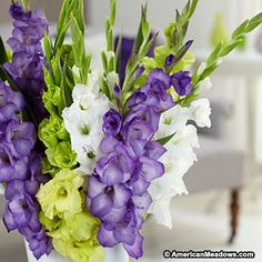 A fabulous color combination of purple, green, and white