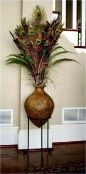 peacock feathers in a vase