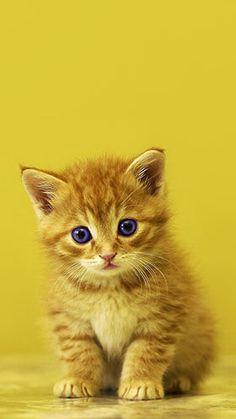 Cute Baby Kitten...