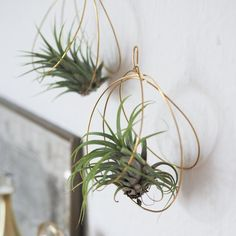 Create this amazing air plant holder - you'll be surprised how easy it is! See the full tutorial with pictures (in German).