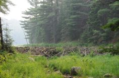 Digital Download Photography - Beaver Dam by OrangePeelPaperie on Etsy