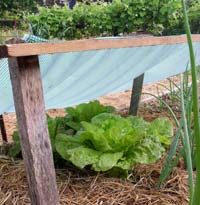 Preparing your Garden for Hot Summer Weather, an informative article from growveg.com