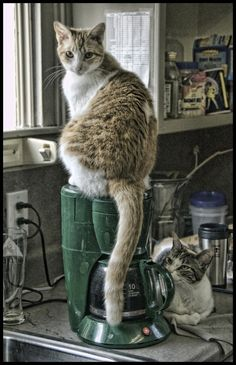 Cat-coffee-machine