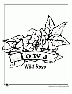 Wonderful 50 State Flower Coloring Pages, From Alabama To Wyoming!