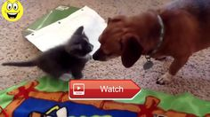 Funny cats and dogs playing together Funny videos compilation  Funny cats and dogs playing together Funny videos compilation Funny cats compilation Funny videos Funny animals Thanks for watching rating  on Pet Lovers