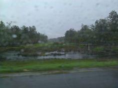 Marshlands near new Orleans. Beauty