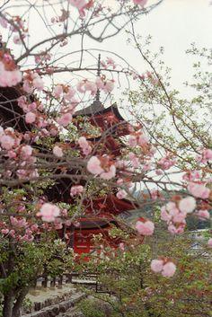 Miyajima, Hiroshima | Japan (by Kevin Tadge / Laura Lamp)
