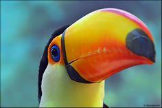 фото попугая какаду туканы пальмы - Поиск в Google