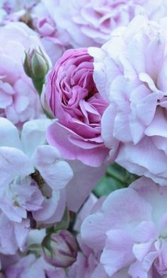 34 Best French Roses J Adore Images Beautiful Flowers