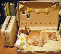 Most indoor dog houses/crates are, let's face it, pretty ugly. Below are some more creative ways of making a space for your pet without metal fencing taking a prime spot in your living room. Diy Pour Chien, Happy March, Designer Dog Beds, Old Suitcases, Yorkies, Chihuahuas, Pet Beds, Doggie Beds, Dog Houses