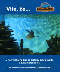 Víte, že... #morskysvet #morskysvetpraha #seaworld #seaworldprague #praha #prague #touristprague #zoo #viteze #ryby #zraloci #koraly #hledasenemo Praha, Sea World