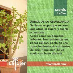 """También conocida como """"Portulacaria afra"""". Además de darle vida y color a tu hogar, puede que te ayude a atraer cosas buenas. ¿Te gusta?   Foto de: http://tutunamituna.blogspot.mx/   #jardin #plantas #garden #homedecor #decoracion #hogar"""