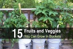 Do you live in an apartment or a house with a small backyard? Have you always wanted a garden but don't have enough space? There's a solution: Bucket gardening. All you need are some 5 gallon buckets, rocks, peat moss, planting soil, and compost. That might sound like a lot, but it's actually very simple. This article explains how to grow food in buckets. Not only is bucket gardening a great solution for people with limited space, it has many advantages over traditional gardening....