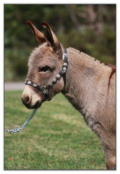 Mini Donkey!!