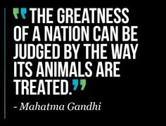 """""""The greatness of a nation can be judged by the way its animals are treated."""" -Gandhi"""
