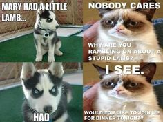 Grumpy cat and evil dog. and like OMG! get some yourself some pawtastic adorable - Funny Husky Meme - Funny Husky Quote - The post Grumpy cat and evil dog. and like OMG! get some yourself some pawtastic adorable appeared first on Gag Dad. Funny Animal Quotes, Animal Jokes, Funny Animal Pictures, Cute Funny Animals, Cute Cats, Funniest Animals, Cat Fun, Animal Fun, Fun Dog