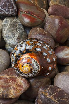 Sea snail shell Photograph by Garry Gay - We Heart It. - Imgend