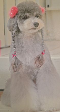 Dog Braids Grooming Style ☀opawz.com supply pet hair dye,pet hair chalk,pet perfume,pet shampoo,spa products....