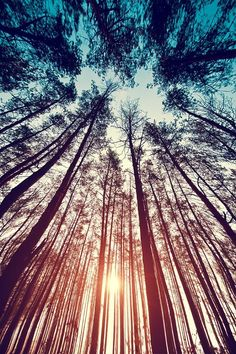 Ground perspective view of sunrise through tress Beautiful❤