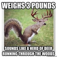 SO TRUE! And annoying so I was out deer hunting a while back an.SO TRUE! And annoying so I was out deer hunting a while back and im sitting there its real qu Deer Hunting Memes, Funny Hunting Pics, Boar Hunting, Funny Deer, Squirrel Hunting, Deer Meme, Hunting Crafts, Antler Crafts, Hunting Stuff
