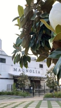 Magnolia Market, Magnolia Homes, Zen House, Joanna Gaines, Fixer Upper, Farmhouse Decor, Places To Go, Family Room, Texas