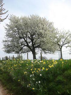 Bemelen, Zuid-Limburg.