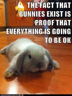 THE FACT THAT BUNNIES EXIST IS PROOF THAT EVERYTHING IS GOING TO BE OK -- hehe!! Thinking of you mom!!